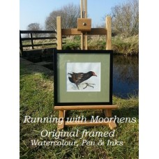 Running with Moorhens by Lesley Pearson